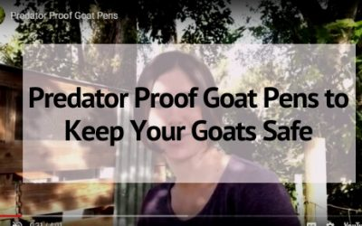 Predator Proof Goat Pens to Keep Your Goats Safe