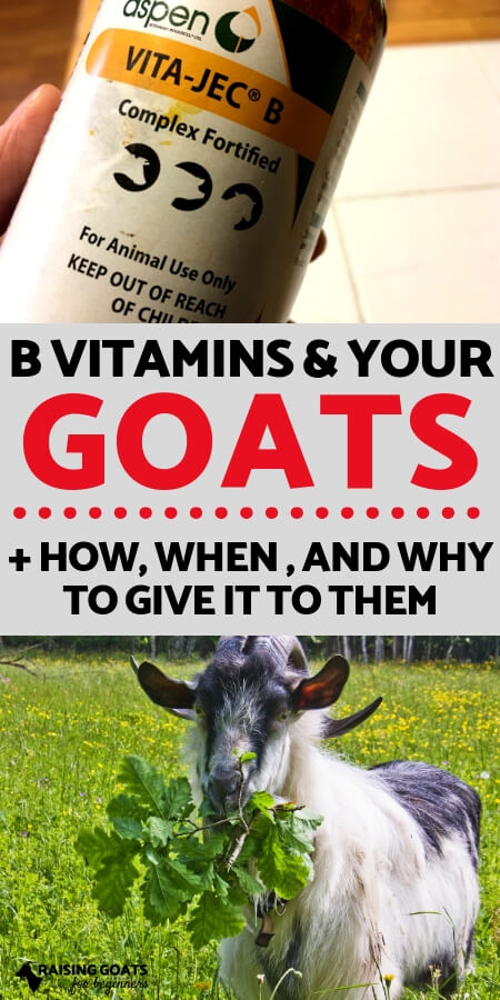 Raising Goats: How, When, and Why to give your goats vitamin B