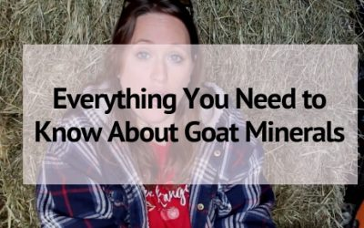 Everything You Need to Know About Goat Minerals