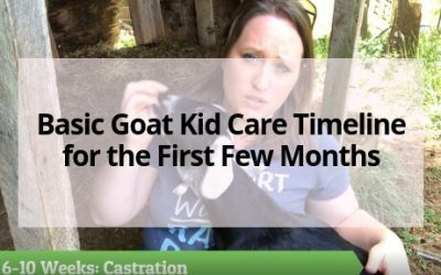 Basic Goat Kid Care Timeline for the First Few Months