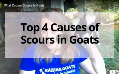 Top 4 Causes of Scours in Goats
